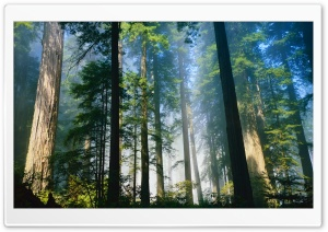 Redwood HD Wide Wallpaper for Widescreen
