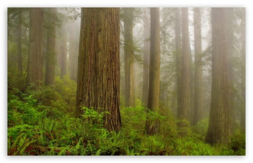 Redwood National Park HD wallpaper for Wide 16:10 5:3 Widescreen WHXGA WQXGA WUXGA WXGA WGA ; HD 16:9 High Definition WQHD QWXGA 1080p 900p 720p QHD nHD ; Standard 4:3 5:4 3:2 Fullscreen UXGA XGA SVGA QSXGA SXGA DVGA HVGA HQVGA devices ( Apple PowerBook G4 iPhone 4 3G 3GS iPod Touch ) ; Tablet 1:1 ; iPad 1/2/Mini ; Mobile 4:3 5:3 3:2 16:9 5:4 - UXGA XGA SVGA WGA DVGA HVGA HQVGA devices ( Apple PowerBook G4 iPhone 4 3G 3GS iPod Touch ) WQHD QWXGA 1080p 900p 720p QHD nHD QSXGA SXGA ;