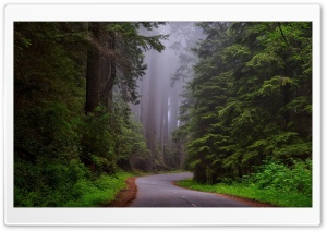 Redwood National Park, California HD Wide Wallpaper for Widescreen