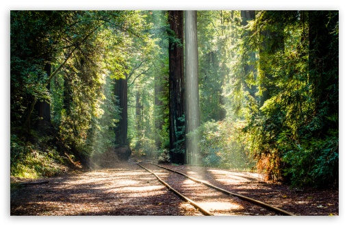 RedWood Trees, Forest, Sun Rays UltraHD Wallpaper for Wide 16:10 5:3 Widescreen WHXGA WQXGA WUXGA WXGA WGA ; 8K UHD TV 16:9 Ultra High Definition 2160p 1440p 1080p 900p 720p ; UHD 16:9 2160p 1440p 1080p 900p 720p ; Standard 4:3 5:4 3:2 Fullscreen UXGA XGA SVGA QSXGA SXGA DVGA HVGA HQVGA ( Apple PowerBook G4 iPhone 4 3G 3GS iPod Touch ) ; Tablet 1:1 ; iPad 1/2/Mini ; Mobile 4:3 5:3 3:2 16:9 5:4 - UXGA XGA SVGA WGA DVGA HVGA HQVGA ( Apple PowerBook G4 iPhone 4 3G 3GS iPod Touch ) 2160p 1440p 1080p 900p 720p QSXGA SXGA ;