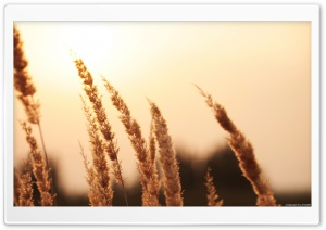 Reed HD Wide Wallpaper for Widescreen