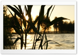 Reed, Sunset HD Wide Wallpaper for Widescreen