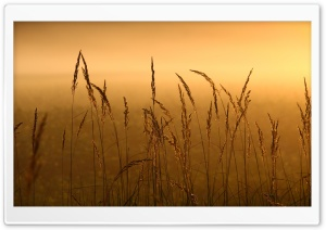 Reeds HD Wide Wallpaper for Widescreen
