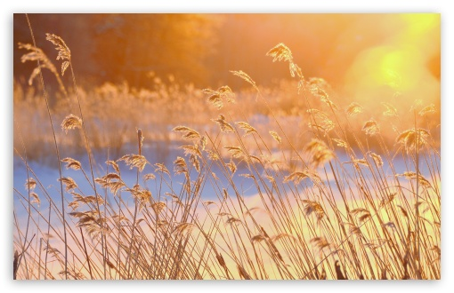 Reeds In The Morning Sun ❤ 4K UHD Wallpaper for Wide 16:10 5:3 Widescreen WHXGA WQXGA WUXGA WXGA WGA ; 4K UHD 16:9 Ultra High Definition 2160p 1440p 1080p 900p 720p ; UHD 16:9 2160p 1440p 1080p 900p 720p ; Standard 4:3 5:4 3:2 Fullscreen UXGA XGA SVGA QSXGA SXGA DVGA HVGA HQVGA ( Apple PowerBook G4 iPhone 4 3G 3GS iPod Touch ) ; Tablet 1:1 ; iPad 1/2/Mini ; Mobile 4:3 5:3 3:2 16:9 5:4 - UXGA XGA SVGA WGA DVGA HVGA HQVGA ( Apple PowerBook G4 iPhone 4 3G 3GS iPod Touch ) 2160p 1440p 1080p 900p 720p QSXGA SXGA ;