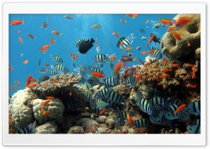 Reef HD Wide Wallpaper for Widescreen