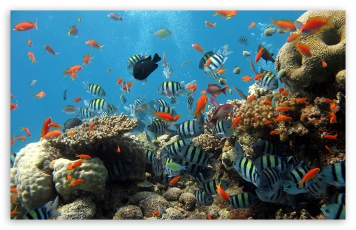 Reef HD wallpaper for Wide 16:10 5:3 Widescreen WHXGA WQXGA WUXGA WXGA WGA ; HD 16:9 High Definition WQHD QWXGA 1080p 900p 720p QHD nHD ; Standard 4:3 5:4 3:2 Fullscreen UXGA XGA SVGA QSXGA SXGA DVGA HVGA HQVGA devices ( Apple PowerBook G4 iPhone 4 3G 3GS iPod Touch ) ; Tablet 1:1 ; iPad 1/2/Mini ; Mobile 4:3 5:3 3:2 16:9 5:4 - UXGA XGA SVGA WGA DVGA HVGA HQVGA devices ( Apple PowerBook G4 iPhone 4 3G 3GS iPod Touch ) WQHD QWXGA 1080p 900p 720p QHD nHD QSXGA SXGA ;