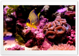 Reef Fish HD Wide Wallpaper for Widescreen