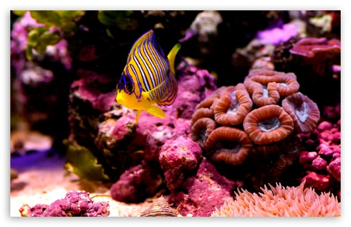 Reef Fish HD wallpaper for Wide 16:10 5:3 Widescreen WHXGA WQXGA WUXGA WXGA WGA ; HD 16:9 High Definition WQHD QWXGA 1080p 900p 720p QHD nHD ; Standard 4:3 5:4 3:2 Fullscreen UXGA XGA SVGA QSXGA SXGA DVGA HVGA HQVGA devices ( Apple PowerBook G4 iPhone 4 3G 3GS iPod Touch ) ; Tablet 1:1 ; iPad 1/2/Mini ; Mobile 4:3 5:3 3:2 16:9 5:4 - UXGA XGA SVGA WGA DVGA HVGA HQVGA devices ( Apple PowerBook G4 iPhone 4 3G 3GS iPod Touch ) WQHD QWXGA 1080p 900p 720p QHD nHD QSXGA SXGA ;