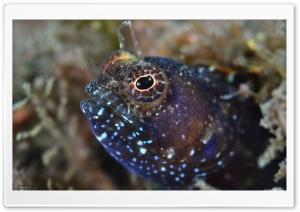 Reef Fish Macro HD Wide Wallpaper for 4K UHD Widescreen desktop & smartphone