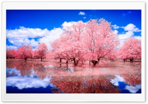 Reflected Glory HD Wide Wallpaper for Widescreen