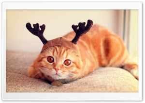 Reindeer Cat HD Wide Wallpaper for 4K UHD Widescreen desktop & smartphone