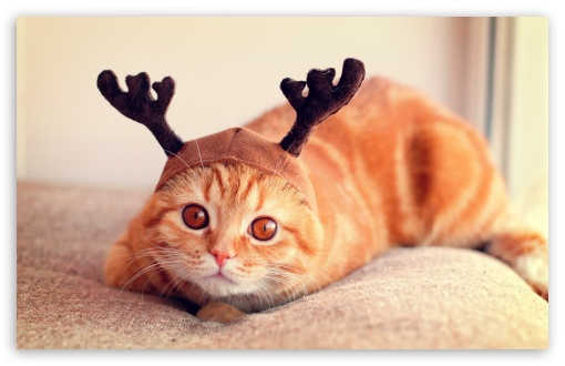 Reindeer Cat HD wallpaper for Wide 16:10 5:3 Widescreen WHXGA WQXGA WUXGA WXGA WGA ; HD 16:9 High Definition WQHD QWXGA 1080p 900p 720p QHD nHD ; Standard 4:3 5:4 3:2 Fullscreen UXGA XGA SVGA QSXGA SXGA DVGA HVGA HQVGA devices ( Apple PowerBook G4 iPhone 4 3G 3GS iPod Touch ) ; Tablet 1:1 ; iPad 1/2/Mini ; Mobile 4:3 5:3 3:2 16:9 5:4 - UXGA XGA SVGA WGA DVGA HVGA HQVGA devices ( Apple PowerBook G4 iPhone 4 3G 3GS iPod Touch ) WQHD QWXGA 1080p 900p 720p QHD nHD QSXGA SXGA ;