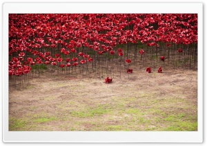Remembrance Poppy HD Wide Wallpaper for Widescreen