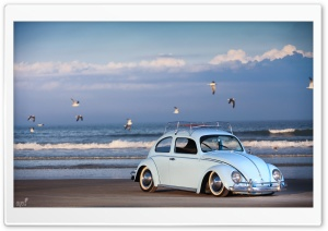 Renfrow's Bug Ultra HD Wallpaper for 4K UHD Widescreen desktop, tablet & smartphone