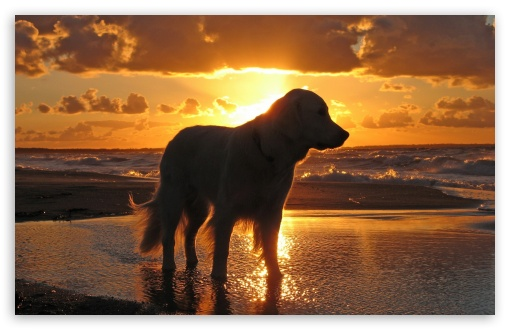 Retriever In The Sunset ❤ 4K UHD Wallpaper for Wide 16:10 5:3 Widescreen WHXGA WQXGA WUXGA WXGA WGA ; 4K UHD 16:9 Ultra High Definition 2160p 1440p 1080p 900p 720p ; Standard 4:3 5:4 3:2 Fullscreen UXGA XGA SVGA QSXGA SXGA DVGA HVGA HQVGA ( Apple PowerBook G4 iPhone 4 3G 3GS iPod Touch ) ; Tablet 1:1 ; iPad 1/2/Mini ; Mobile 4:3 5:3 3:2 16:9 5:4 - UXGA XGA SVGA WGA DVGA HVGA HQVGA ( Apple PowerBook G4 iPhone 4 3G 3GS iPod Touch ) 2160p 1440p 1080p 900p 720p QSXGA SXGA ;