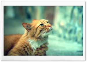Retro Cat HD Wide Wallpaper for Widescreen