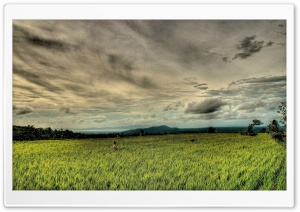 Rice Field HDR HD Wide Wallpaper for Widescreen