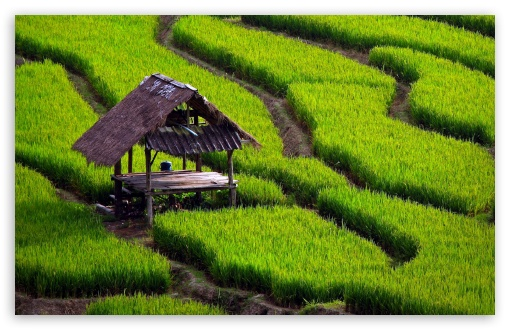Rice Field Landscape HD wallpaper for Wide 16:10 5:3 Widescreen WHXGA WQXGA WUXGA WXGA WGA ; HD 16:9 High Definition WQHD QWXGA 1080p 900p 720p QHD nHD ; UHD 16:9 WQHD QWXGA 1080p 900p 720p QHD nHD ; Standard 4:3 5:4 3:2 Fullscreen UXGA XGA SVGA QSXGA SXGA DVGA HVGA HQVGA devices ( Apple PowerBook G4 iPhone 4 3G 3GS iPod Touch ) ; Tablet 1:1 ; iPad 1/2/Mini ; Mobile 4:3 5:3 3:2 16:9 5:4 - UXGA XGA SVGA WGA DVGA HVGA HQVGA devices ( Apple PowerBook G4 iPhone 4 3G 3GS iPod Touch ) WQHD QWXGA 1080p 900p 720p QHD nHD QSXGA SXGA ;