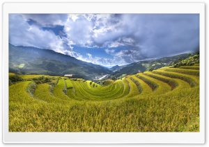 Rice Paddy Terraces HD Wide Wallpaper for 4K UHD Widescreen desktop & smartphone