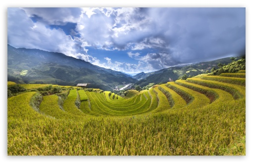 Rice Paddy Terraces HD wallpaper for Wide 16:10 5:3 Widescreen WHXGA WQXGA WUXGA WXGA WGA ; HD 16:9 High Definition WQHD QWXGA 1080p 900p 720p QHD nHD ; Standard 4:3 5:4 3:2 Fullscreen UXGA XGA SVGA QSXGA SXGA DVGA HVGA HQVGA devices ( Apple PowerBook G4 iPhone 4 3G 3GS iPod Touch ) ; Tablet 1:1 ; iPad 1/2/Mini ; Mobile 4:3 5:3 3:2 16:9 5:4 - UXGA XGA SVGA WGA DVGA HVGA HQVGA devices ( Apple PowerBook G4 iPhone 4 3G 3GS iPod Touch ) WQHD QWXGA 1080p 900p 720p QHD nHD QSXGA SXGA ; Dual 16:10 5:3 16:9 4:3 5:4 WHXGA WQXGA WUXGA WXGA WGA WQHD QWXGA 1080p 900p 720p QHD nHD UXGA XGA SVGA QSXGA SXGA ;