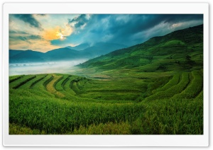 Rice Terraces HD Wide Wallpaper for Widescreen