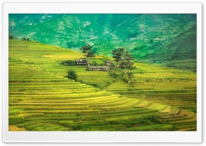 Rice Terraces, Mountain HD Wide Wallpaper for Widescreen