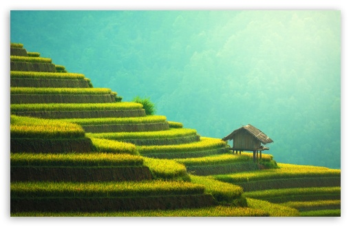 Download Rice Terraces Mountain Landscape HD Wallpaper
