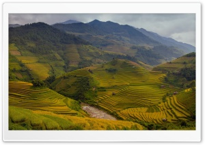 Rice Terraces Vietnam HD Wide Wallpaper for Widescreen