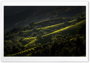 Rice Terraces Vietnam Ultra HD Wallpaper for 4K UHD Widescreen desktop, tablet & smartphone