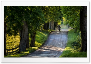 Ride, Country Road, Trees, Summer Ultra HD Wallpaper for 4K UHD Widescreen desktop, tablet & smartphone