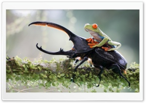 Riding A Beetle HD Wide Wallpaper for Widescreen