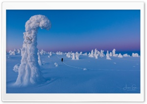 Riisitunturi National Park Winter Ultra HD Wallpaper for 4K UHD Widescreen desktop, tablet & smartphone