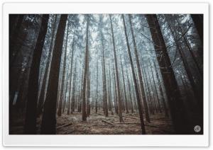 Rime on Trees, Forest Ultra HD Wallpaper for 4K UHD Widescreen desktop, tablet & smartphone