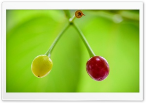 Ripe and Unripe Cherries HD Wide Wallpaper for 4K UHD Widescreen desktop & smartphone
