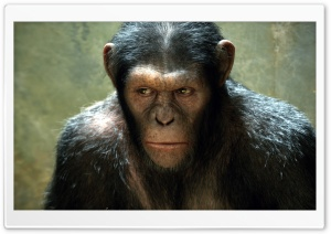 Rise of the Planet of the Apes (2011) HD Wide Wallpaper for Widescreen