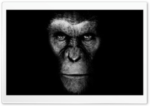 Rise Of The Planet Of The Apes... HD Wide Wallpaper for Widescreen