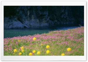 River Bank Flowers HD Wide Wallpaper for Widescreen