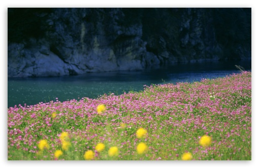 River Bank Flowers HD wallpaper for Wide 16:10 5:3 Widescreen WHXGA WQXGA WUXGA WXGA WGA ; HD 16:9 High Definition WQHD QWXGA 1080p 900p 720p QHD nHD ; Standard 4:3 5:4 3:2 Fullscreen UXGA XGA SVGA QSXGA SXGA DVGA HVGA HQVGA devices ( Apple PowerBook G4 iPhone 4 3G 3GS iPod Touch ) ; Tablet 1:1 ; iPad 1/2/Mini ; Mobile 4:3 5:3 3:2 16:9 5:4 - UXGA XGA SVGA WGA DVGA HVGA HQVGA devices ( Apple PowerBook G4 iPhone 4 3G 3GS iPod Touch ) WQHD QWXGA 1080p 900p 720p QHD nHD QSXGA SXGA ;