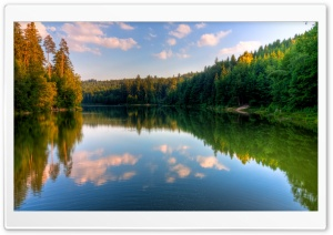 River, Forest HD Wide Wallpaper for Widescreen