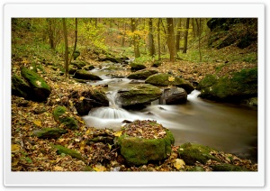 River Forest, Autumn HD Wide Wallpaper for Widescreen