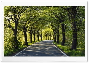 Road Among Trees HD Wide Wallpaper for Widescreen