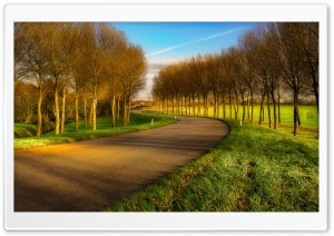 Road Between Field And Forest Ultra HD Wallpaper for 4K UHD Widescreen desktop, tablet & smartphone