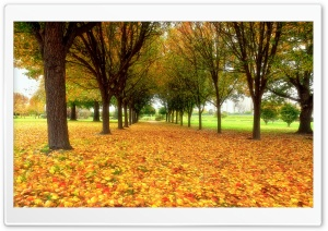 Road Covered With Autumn Leaves HD Wide Wallpaper for Widescreen