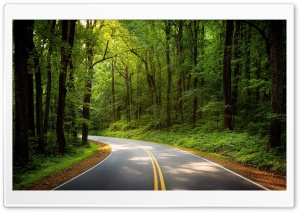 Road, Green Trees, Forest