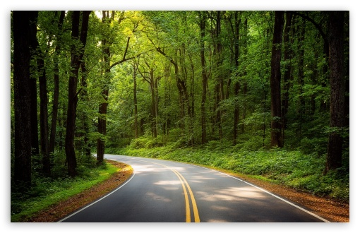 road green trees forest wallpapers
