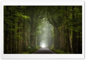 Road, Green Trees, Summer Seasons HD Wide Wallpaper for 4K UHD Widescreen desktop & smartphone