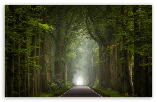 Road, Green Trees, Summer Seasons ❤ 4K UHD Wallpaper for Wide 16:10 5:3 Widescreen WHXGA WQXGA WUXGA WXGA WGA ; 4K UHD 16:9 Ultra High Definition 2160p 1440p 1080p 900p 720p ; Standard 4:3 5:4 3:2 Fullscreen UXGA XGA SVGA QSXGA SXGA DVGA HVGA HQVGA ( Apple PowerBook G4 iPhone 4 3G 3GS iPod Touch ) ; Smartphone 16:9 3:2 5:3 2160p 1440p 1080p 900p 720p DVGA HVGA HQVGA ( Apple PowerBook G4 iPhone 4 3G 3GS iPod Touch ) WGA ; Tablet 1:1 ; iPad 1/2/Mini ; Mobile 4:3 5:3 3:2 16:9 5:4 - UXGA XGA SVGA WGA DVGA HVGA HQVGA ( Apple PowerBook G4 iPhone 4 3G 3GS iPod Touch ) 2160p 1440p 1080p 900p 720p QSXGA SXGA ;