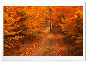 Road Less Travelled In Autumn Connecticut HD Wide Wallpaper for Widescreen