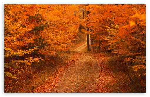 Road Less Travelled In Autumn Connecticut HD wallpaper for Wide 16:10 5:3 Widescreen WHXGA WQXGA WUXGA WXGA WGA ; HD 16:9 High Definition WQHD QWXGA 1080p 900p 720p QHD nHD ; Standard 4:3 5:4 3:2 Fullscreen UXGA XGA SVGA QSXGA SXGA DVGA HVGA HQVGA devices ( Apple PowerBook G4 iPhone 4 3G 3GS iPod Touch ) ; Tablet 1:1 ; iPad 1/2/Mini ; Mobile 4:3 5:3 3:2 16:9 5:4 - UXGA XGA SVGA WGA DVGA HVGA HQVGA devices ( Apple PowerBook G4 iPhone 4 3G 3GS iPod Touch ) WQHD QWXGA 1080p 900p 720p QHD nHD QSXGA SXGA ;