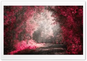 Road Nature Love Ultra HD Wallpaper for 4K UHD Widescreen desktop, tablet & smartphone